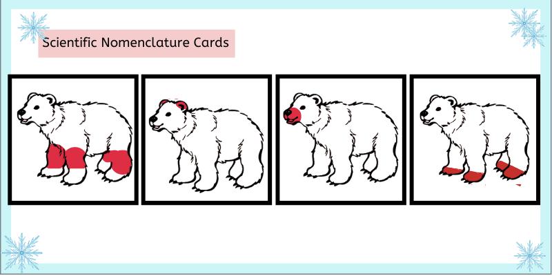 Montessori scientific Normenclature cards for winter